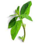 Comment détoxiquer le corps - thé